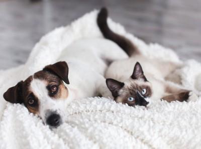 同じ寝方をする犬と猫