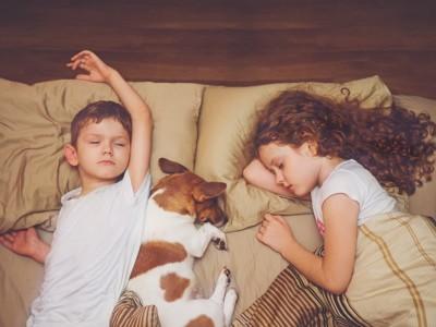 子供たちとベッドで寝る犬