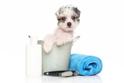 シャンプーハットをかぶっている犬