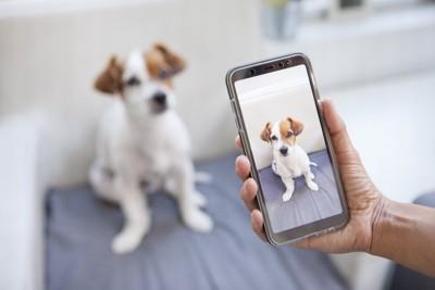 犬の写真を撮る手