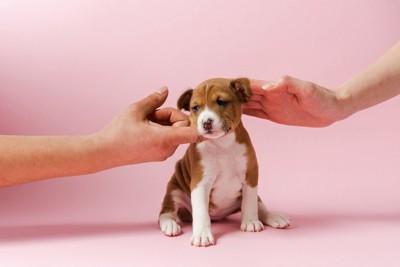 人に撫でられている子犬