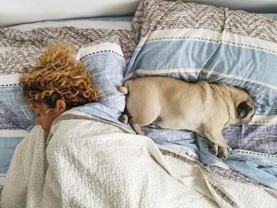 お尻を向けて寝るパグ