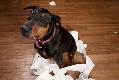トイレットペーパーに囲まれる犬