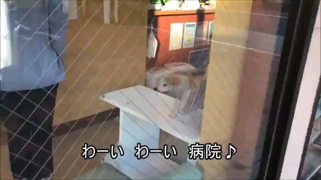 わーい~字幕