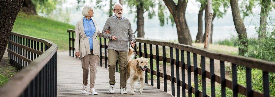 散歩をする老夫婦と犬