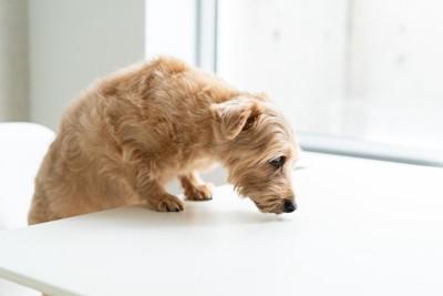 なにか探している犬