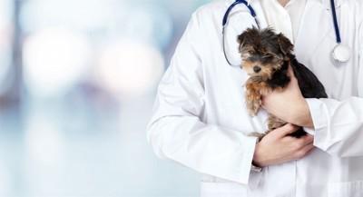 獣医師に抱かれている子犬