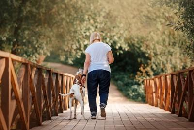 橋を歩いている犬と女性