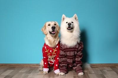 並んで座る部屋着を着た2頭の大型犬