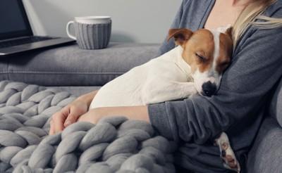女性の胸で眠る犬