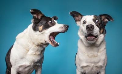 吠える犬とビックリする犬