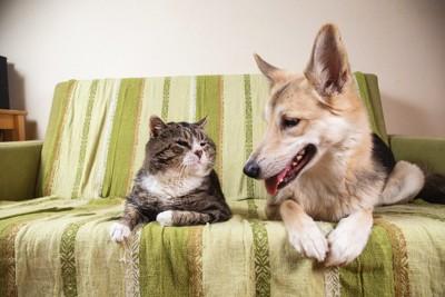 仲良く並んだ犬と猫