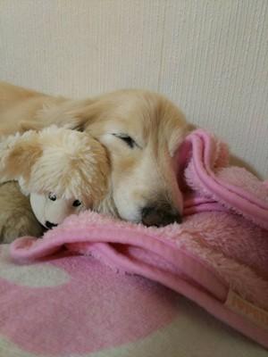 #壁にもたれて寝る愛犬#