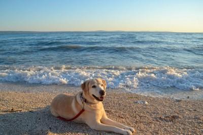 波打ち際に座る犬