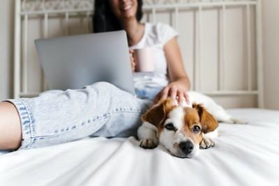 パソコン作業中の飼い主に寄り添う犬