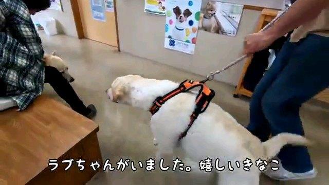 ラブちゃん~字幕