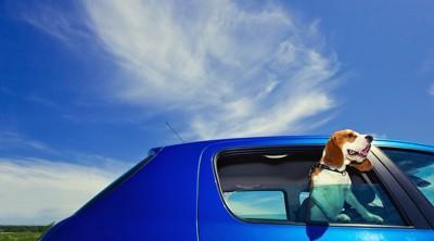 車に乗った犬と綺麗な青空