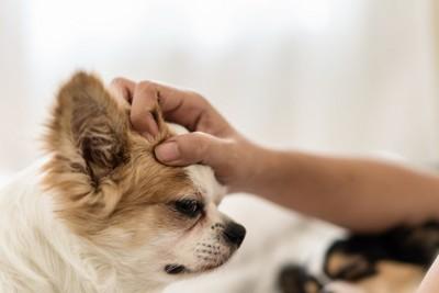 頭を撫でられて嫌そうな表情の犬