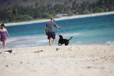 ビーチと犬