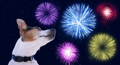 花火と後ろを振り返る犬