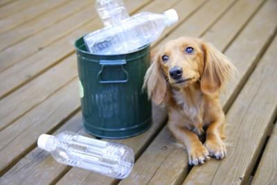 ペットボトルと犬