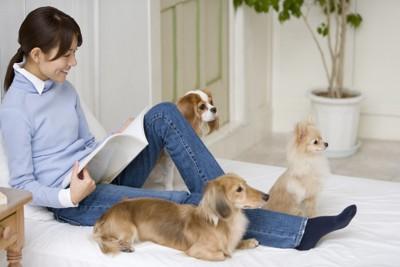 女性と3匹の犬