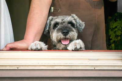 窓から外を眺める犬と飼い主