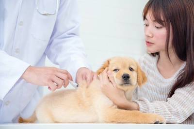 病院でワクチンを接種する子犬