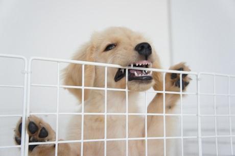 イライラ愛犬
