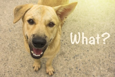 「what?」の言葉とこちらを見つめる犬