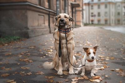 小型犬のリードを咥えて座る大型犬
