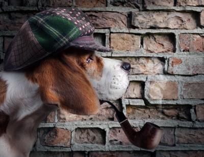 ペット探偵