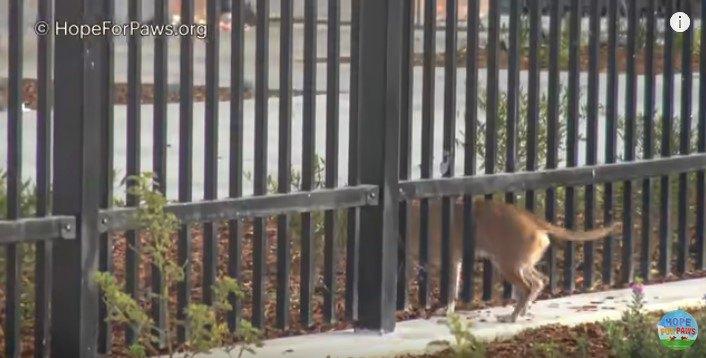 フェンスのすき間を通り抜ける犬