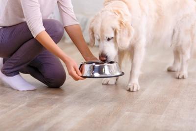 ご飯を与えられた犬