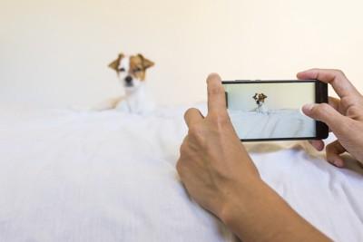ベッドで撮られる犬