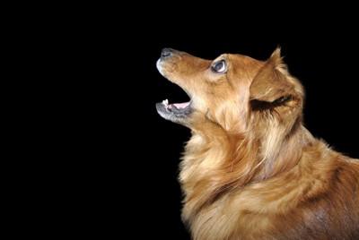 驚き顔の犬