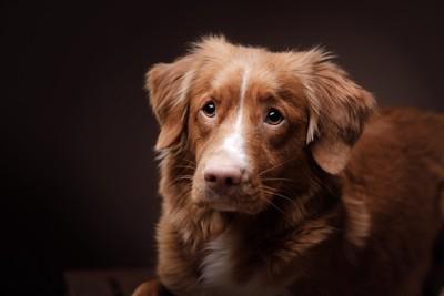悲しい目で見つめる犬