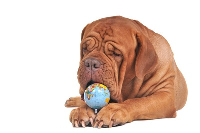 地球儀と犬