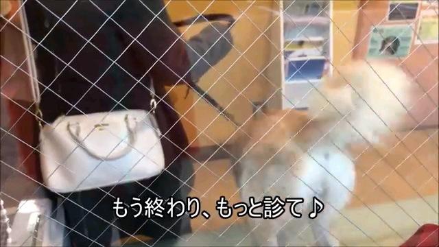 もう~字幕