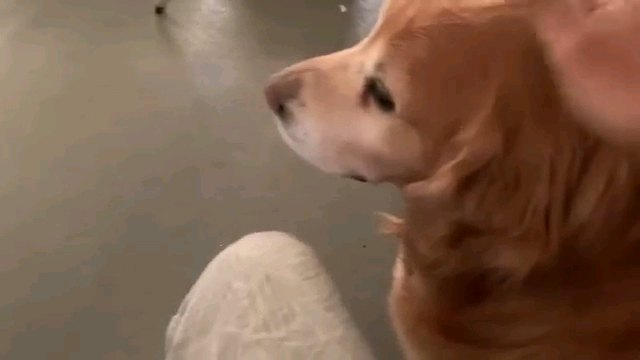横向きの犬