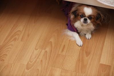 ベットの下に隠れる犬