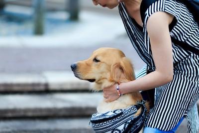 飼い主にお尻を向ける犬