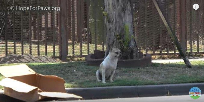木陰で休む犬