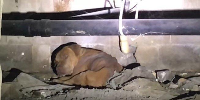 床下にいる茶色い犬