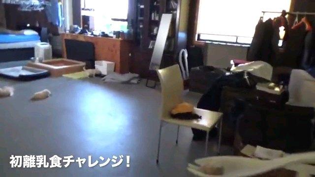 初離乳食~字幕