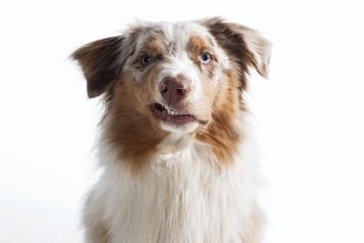 不満げにこちらを見る犬