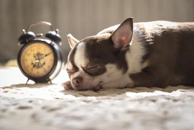 時計の隣で眠る犬