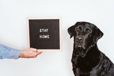 黒い犬とstayhomeの黒板