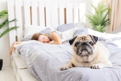ベッドで寝ている女性とパグ