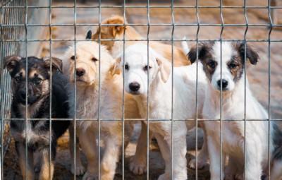 ケージの中にいる5匹の保護犬たち